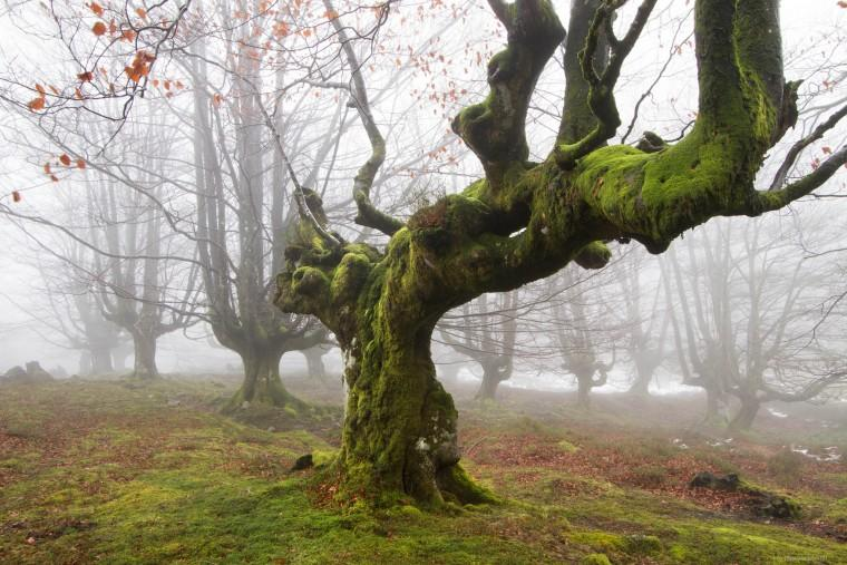 Дерево-со-мхом Скрининг при беременности